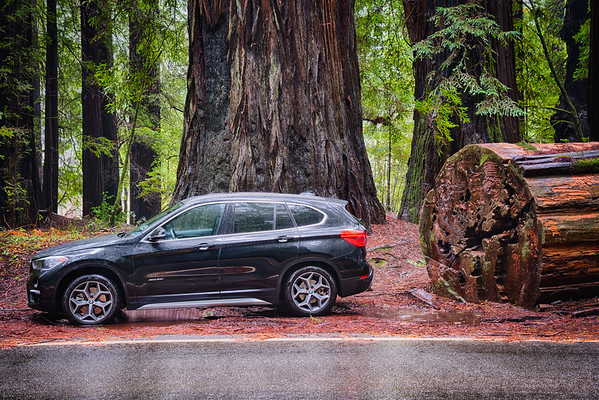 BMW Avenue of the Giants - Humboldt Redwoods