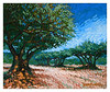 olive grove 2005
