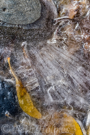 Leaves in Ice #1