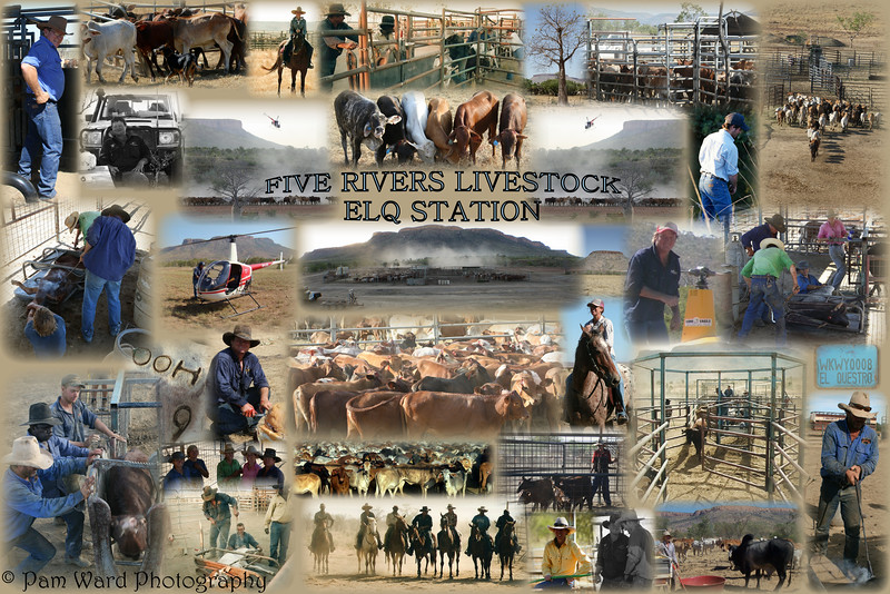 Five Rivers Livestock @ El Questro Station Collage
