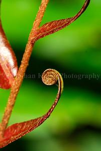Fern Spiral