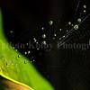 Interstellar Spider Web