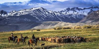 Changing Pastures