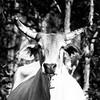 Cow B & W