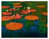 water lilies 1 2005