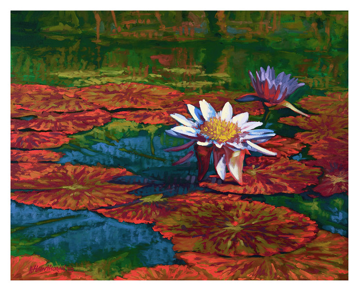 water lilies 2 2005