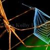 Web-casting spider