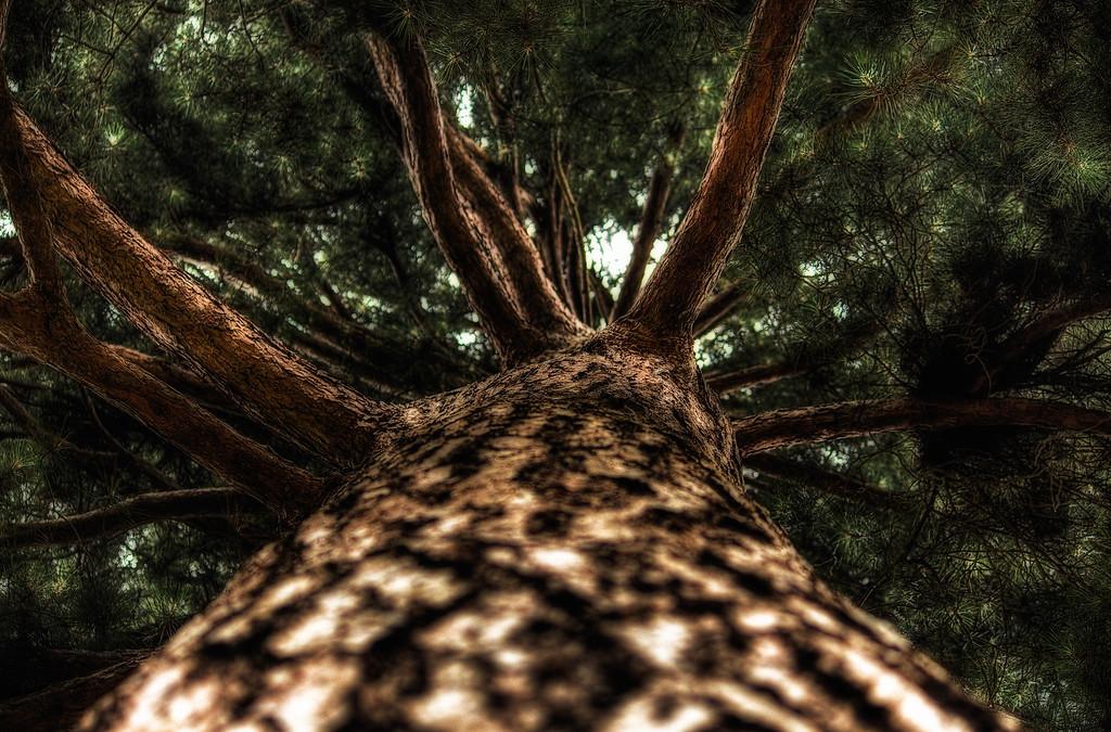 Bark up a Tree