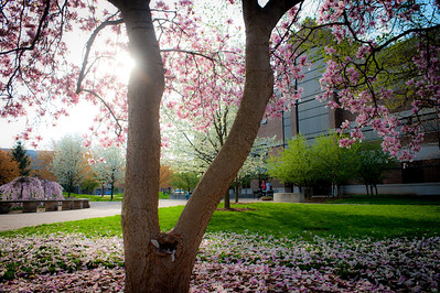 Scenes of campus taken in early spring