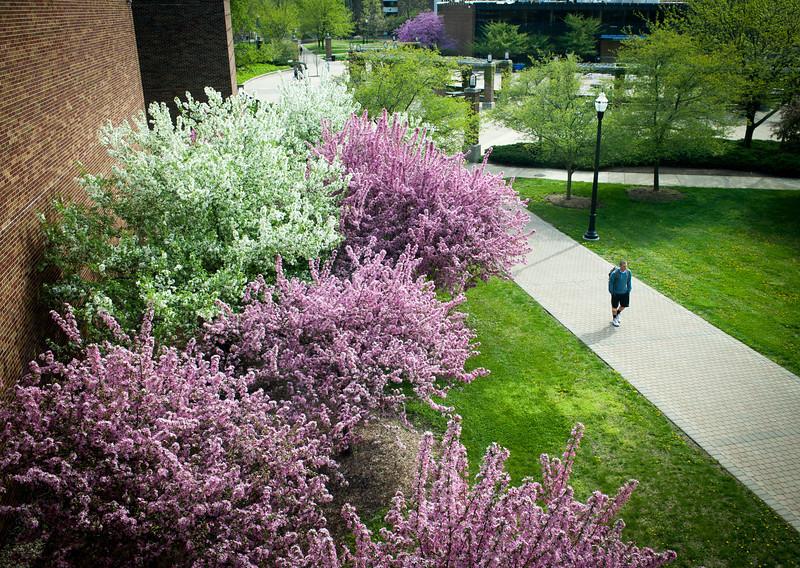 Spring campus scenes taken outside of Science Building facing towards Dede Plaza