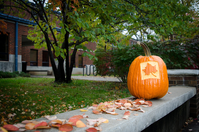 Pumpkin carved with ISU leaf or state in the fall.