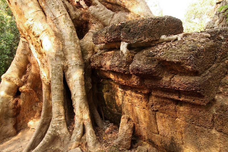 Notice how one root has actually lifted a stone block off the wall! Ta Prohm temple in the Angkor Wat complex, Cambodia.