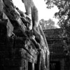 A waterfall of roots. Ta Prohm temple, Angkor Wat, Cambodia