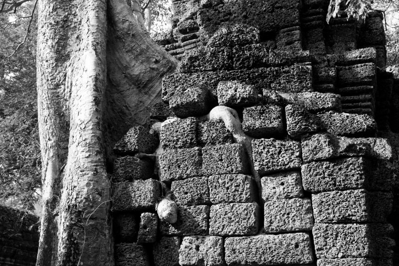 Tree roots seep through an old brick wall in Ta Prohm temple, Angkor Wat