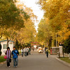 Fall colors line a street on a university campus in Yinchuan, Ningxia
