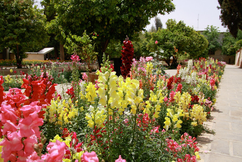 Iran is a land of beautiful flower gardens. Many people enjoy visiting these havens of tranquility in the middle of busy cities.