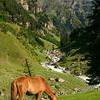 Lush mountain scenery in the Lidder Valley, Kashmir