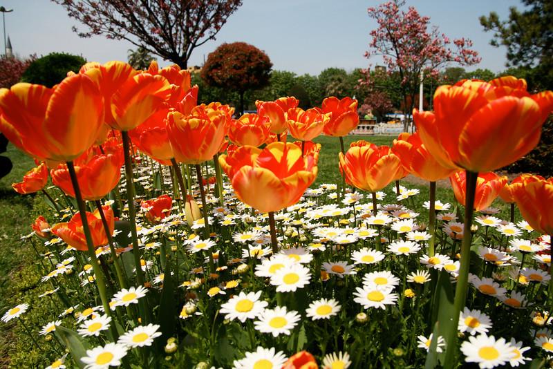 An Istanbul flower garden