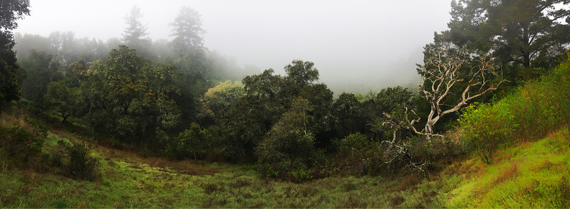 Soquel Valley in morning fog