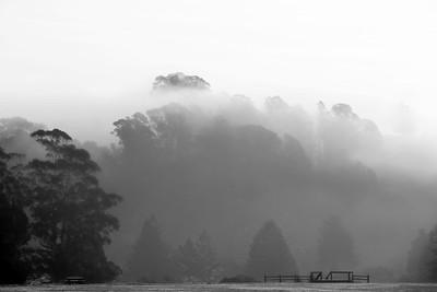 Fog at Anna Jean Cummings Park
