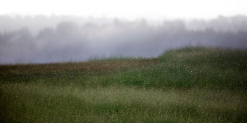 Rainy morning on top of Anna Jean Cummings Park