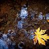 Leaves and rain