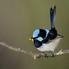 Narrowneck birds, Gold Coast, Queensland.