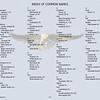 Federation Walk Coastal Reserve Bird List October 2013