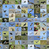 Collage of Birds from Federation Walk, The Spit and Broadwater.