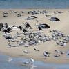 Terns, Broadwater, Gold Coast.