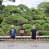 300 year old black pine tree in Hamarikyu Gardens is a public park in Chūō, Tokyo, Japan.<br /> The Hamarikyuu Garden, in Japanese the hamarikyuuonshiteien is an Edo period stroll garden near Shimbashi in Tokyo.