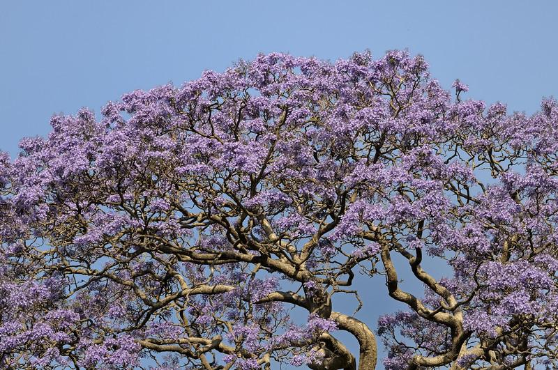 Royal Botanic Gardens, Sydney, Australia.