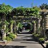 Royal Botanic Gardens, Sydney.