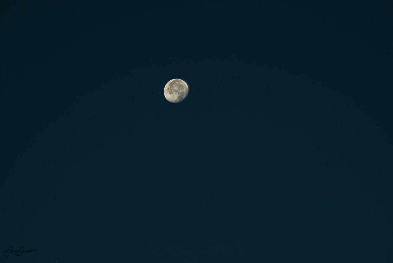 Arubean Moon
