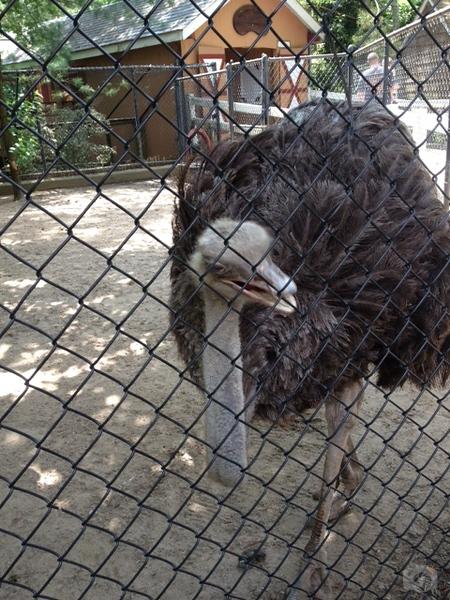 Weissfest 2014 - Staten Island Zoo 10.jpg