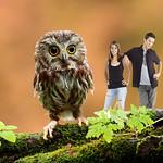 Owl 0058