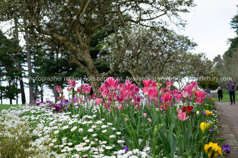 Lennox's flower images.