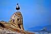 Seabird on Driftwood