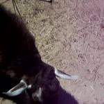 Moms camera photos 047