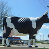 Giant Cheese Cow!