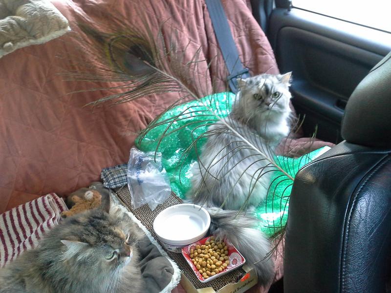 The kitties back seat lounge