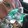 The kitties back seat lounge