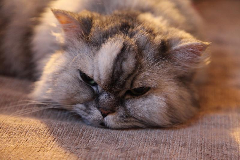 it's been a Long week !