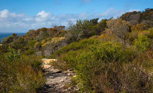 Walking in the Heathland at North Head Sanctuary, Manly