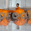 Novice Monks