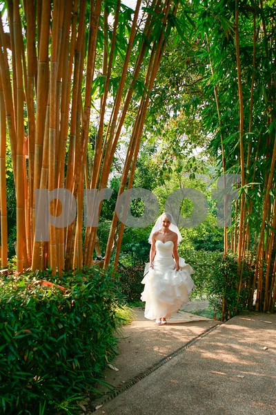 Bride and the Bamboo Trees.