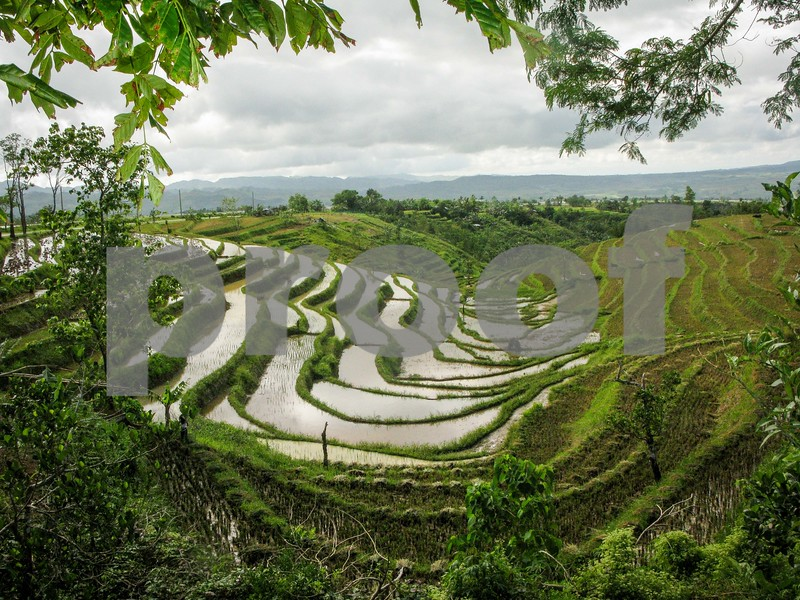 Rice Terraces, Don Salvador, Philippines