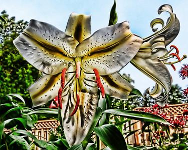 Artsy Trumpet Lily
