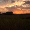 10  G Sunset Barn Grass V