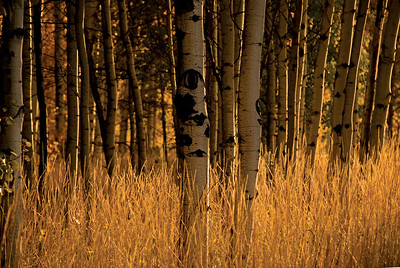 BBR-Views-aspens_DSC0016